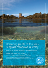 seagrass talk poster