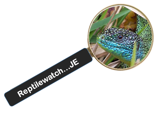 Reptilewatch logo
